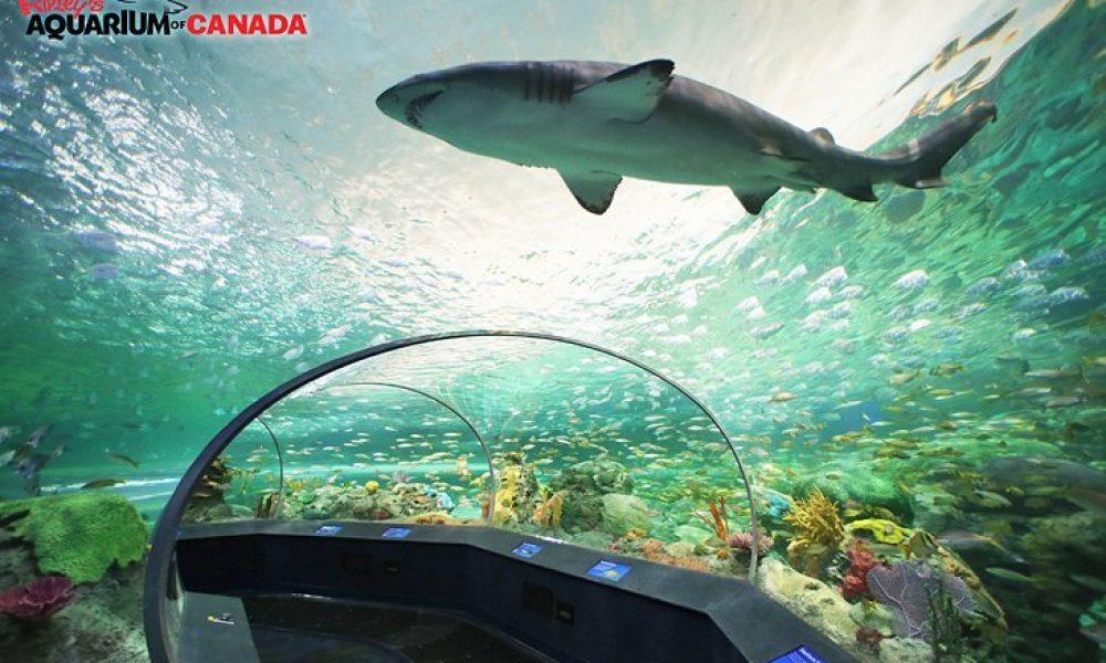 toronto attractions ripleys aquarium shark